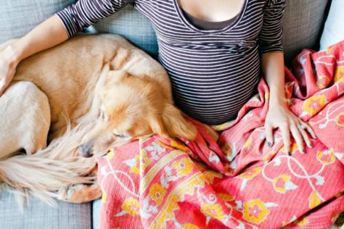 5 Virus Pada Hewan Yang Wajib Diwaspadai Glitzy Mom di Masa Kehamilan