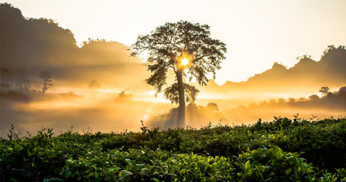 Apa yang Bisa Anda Lakukan di Hari Sejuta Pohon Sedunia?