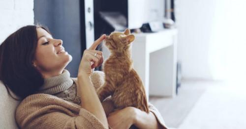 Cara Tepat Merawat Kucing Kesayangan Anda