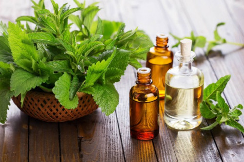 Inilah Manfaat Peppermint Oil Untuk Kecantikan Kulit, Rambut, Hingga Perawatan Kuku