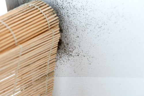 Ketahui Penyebab, Cara Membersihkan, Hingga Pencegahan Timbulnya Jamur Pada Dinding