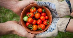 Diet Paleo, Mengenyahkan Aneka Makanan Berproses