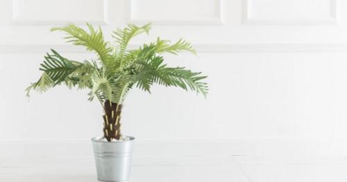 Cocok Ditaruh di Ruangan, Inilah 5 Jenis Tanaman Hias Dalam Rumah yang Bisa Jadi Inspirasi Anda