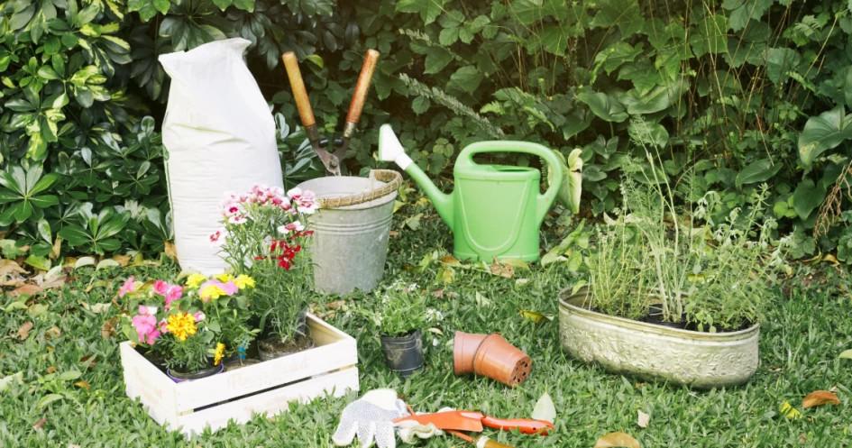 5 Jenis Tanaman Yang Bagus Ditanam Di Depan Rumah Dan Dipercaya Bisa Membawa Keberuntungan Glitzmedia Co